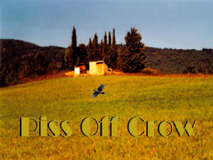 5 Piss off crow